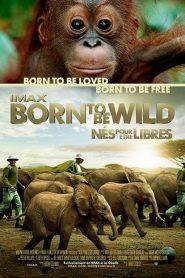 Nés pour être libres